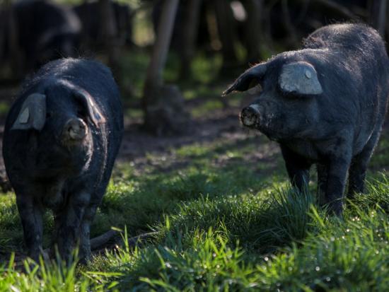 Jambon de Porc noir gascon